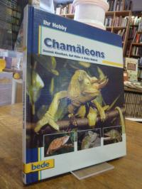 Kieselbach, Chamäleons,