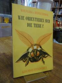 von Buddenbrock-Hettersdorff, Wie orientieren sich die Tiere?